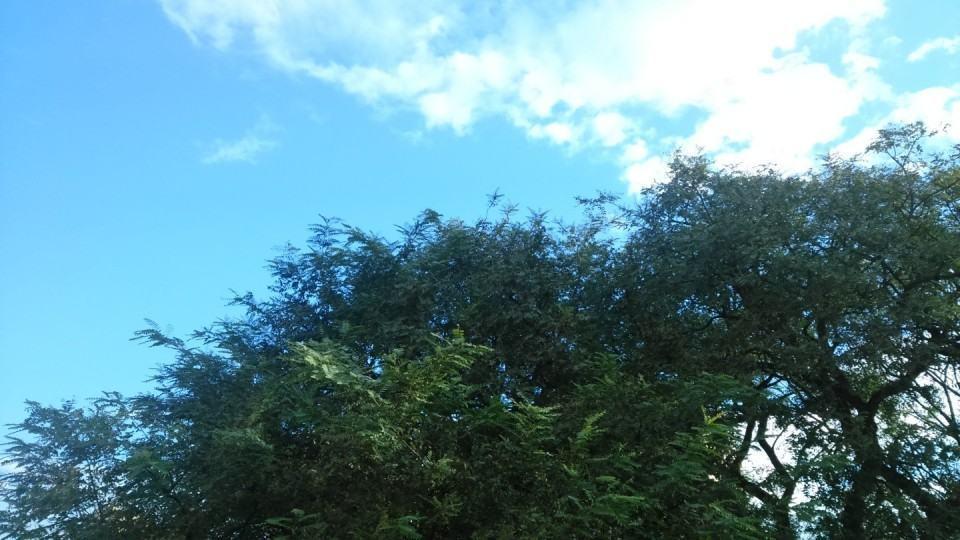 Foto de exemplo: árvore com folhas pequenas e céu.