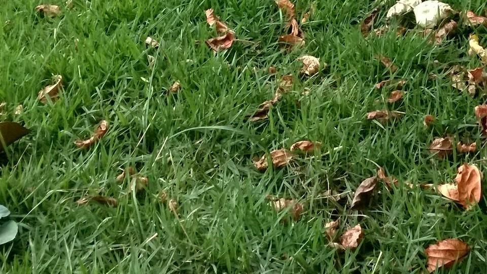 Detalhes da grama e das folhas.