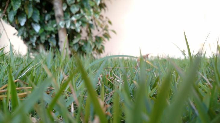 Belo exemplo de baixa profundidade de campo com a câmera do Moto Maxx.