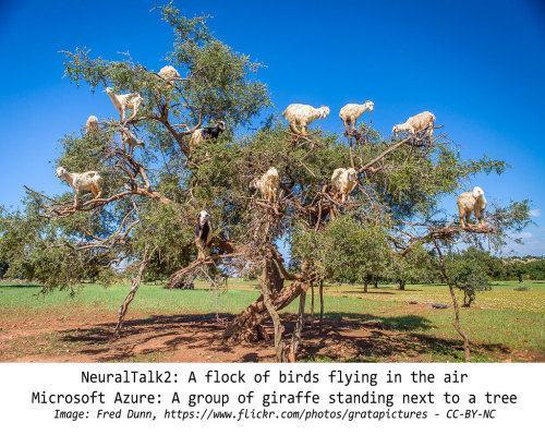Cabras em cima de uma árvore.