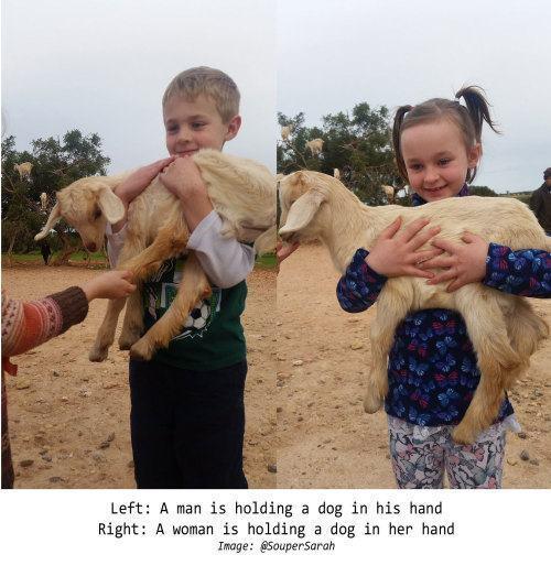 Fotos de crianças segurando ovelhas e os rótulos gerados por algoritmo embaixo.