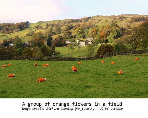 Foto de ovelhas laranjas em um campo.
