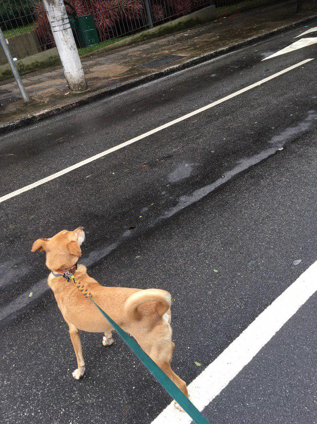 Foto do cachorro de Guilherme durante um passeio pelas ruas de São Paulo.