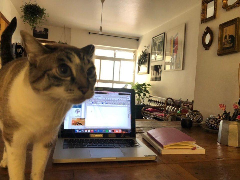 Mesa com notebook e um gato em primeiro plano; ao fundo, uma sala de estar com uma grande janela ensolarada.
