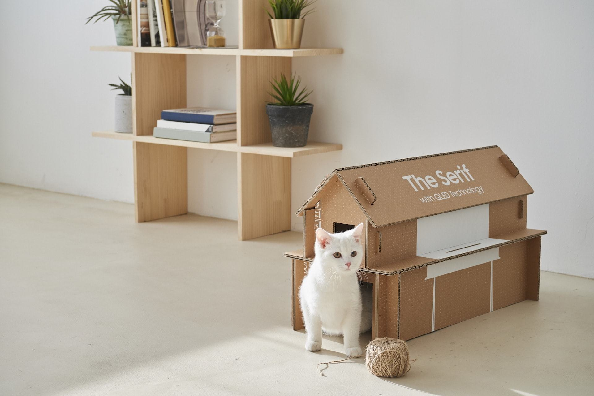 Casinha de gato feita de caixa de TV da Samsung.