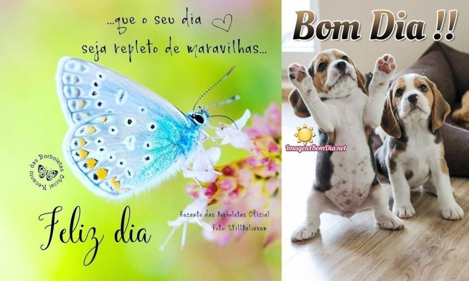 """Duas imagens de bom dia, lado a lado: a da esquerda mostra uma borboleta azul contra um fundo abstrato verde. A da direita, dois filhotinhos de cachorro, um deles sobre as patas traseiras com os """"braços"""" abertos."""